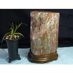 규화목(나무화석) 원석