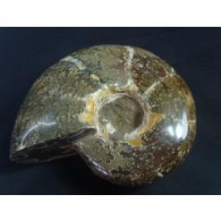 칼싸이트(방해석) 암모나이트