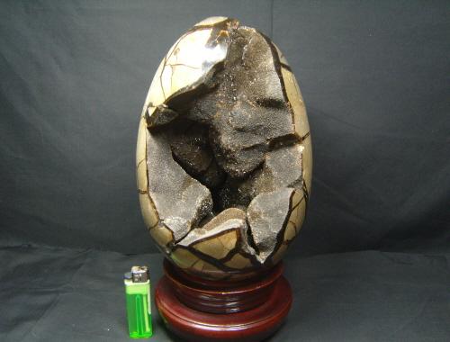 아프리카 대형 셉타리안 계란형