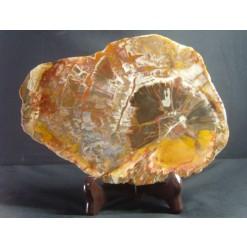 나무화석 (규화목) 판
