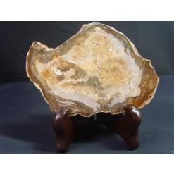 나무화석수정